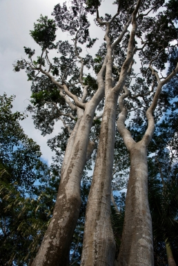 Botanischer Garten in Cienfuegos